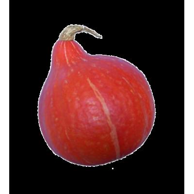 Courge potimarron