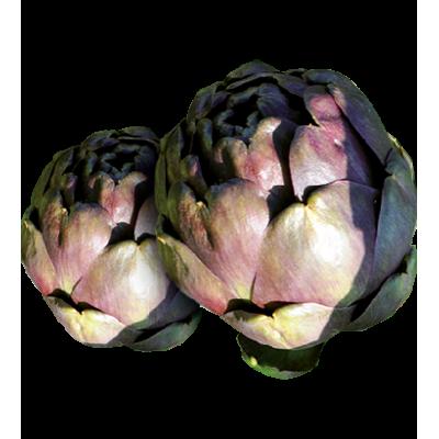Artichaut  violet