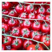 Tomates cerises 🍅🍒 —— #tomate #tomatecerise #veggie #veggiefood #healthyfood #healthy #healthylifestyle #veganlife #livraisonadomicile #livraison #cagnessurmer #nicefrance #nicecotedazur #nice06 #mangersainement #mangermieux #mangersain #saison2021 #summer #summervibes #yummyfood #yummy #panierdefruitsetlégumes #panier #panierpersonnalisé #commandeenligne #colorful #colorfood
