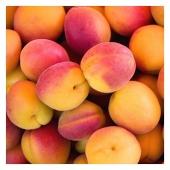 Les abricots de Provence sont là 🍑😍 Disponible sur www.VitaFruits.fr 🔍 #nofilter  ——- #abricot #summervibes #food #nicefrance #livraisonadomicile #fruits #fruitetlegume #livraisonfruitsetlegumes #fruitlover #happyfruit #cagnessurmer #nicecotedazur #nice06 #cotedazurfrance #mangersainement #healthyfood #fruitcolors #yummy #veggie #mangermieux #fruitdesaison #fruitdete #summer #saison #paca #fruitezvouslavie #vitafruits