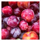 #fruitezvouslavie 😎🌞🍎🍏🍒🍊🍓 ——— #prune #fruits #fruitlover #happyfruit #cagnessurmer #summer #summervibes #summerfruit #nicecotedazur #nice06 #healthylifestyle #healthyfood #yummy #yummyfood #colorfood #colorful