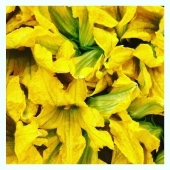 Fleurs de courgette du pays 😍🌸🥒 —-  #healthyfood #fleurs #fleurdecourgette #beignets #vegan #legumesdesaison #summer #beignetdecourgette #nicecotedazur #nicecotedazur #nice06 #cagnessurmer #yummy #yummyfood #fruitezvouslavie #cusine #foodlover #foodstagram #color #yellow #yellowmood #jaune #colorfood #colorful #local #mangersainement #mangermieux